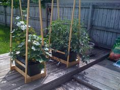 earthbox trellis | Garden / earthbox and trellis - Google Search