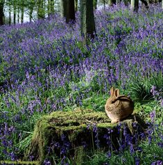 Bluebells and bunny