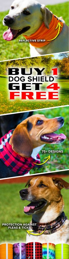 Simple Dog Training Ideas: Finding Programs Of Training For Dogs - Off Grid Living Puppy Training Classes, Training Your Dog, Training Pads, Training Exercises, Crate Training, Potty Training, Pallet Dog Beds, Easiest Dogs To Train, Dog Safety