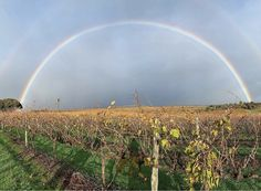 We hope there were 2 pots of gold at the end of this rainbow! 🌈 How lucky are we to be surrounded by such beauty here in McLaren Vale. Thank you for such a stunning photo 🌈 Pot Of Gold, Pots, Rainbow, Mountains, Nature, Travel, Inspiration, Beauty, Biblical Inspiration