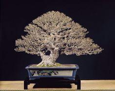 Bonsai Art, Bonsai Garden, Bonsai Trees, String Garden, Natural World, Dandelion, Lion Sculpture, Tropical, Japanese