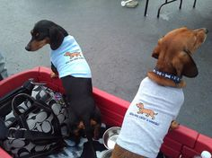 Who You Callin' A Weenie Dachshund Doggie by EmbroideryStation1