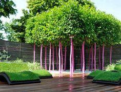 Emmanuel Chaussade: Jardins, Jardin 2011