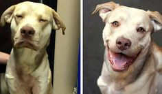Dog With Horrific Injuries From an Embedded Choke Collar Finds a Forever Home!