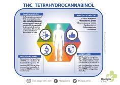 THC - Tetrahidrocannabinol El cannabinoide psicoactivo de la planta del cannabis y que refiere varios efectos terapéuticos. Cannabis, Medical Marijuana, Salud Natural, Medicine, Weed, Blog, Vegetable Garden, Psychoactive Drug, Plants