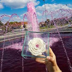 #rosariumbudapest #eternityroses #örökrózsa Budapest, Instagram Posts
