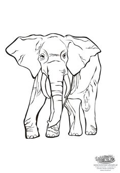 Color The Elephant Family