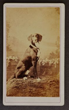 CDV Photograph French Dog
