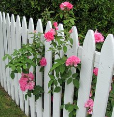 Pink Roses on a White Picket Fence - Garden Design 2020 Picket Fence Garden, Wood Picket Fence, Garden Fencing, White Picket Fences, Fence Design, Garden Design, Beautiful Gardens, Beautiful Flowers, White And Pink Roses