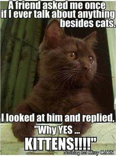 Kittens forever! :)