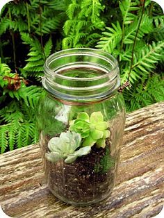 Mason jars and terrariums