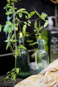Et frodig bad skaper økt velvære og luksusfølelse. Her er tipsene til hvordan du styler badet ditt med planter. Slik finner du plass til planter på badet. Planters, Plant, Window Boxes, Pot Holders, Flower Planters, Pots