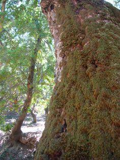 trees - San Francisco Bay Area