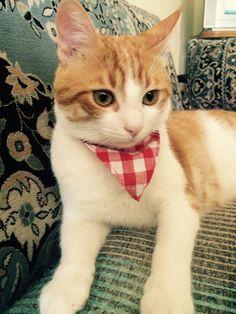 Cool cat kleider