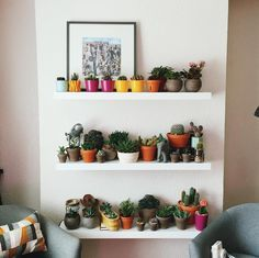 my boyfriend thinks i have too many plants and i'm starting to understand why (but still respectfully disagree with him) by stephcorine