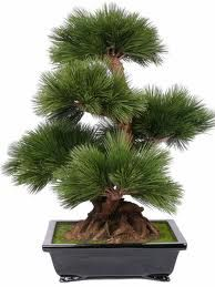 Bonsai Tree.. I'd love to own one beauty.. someday