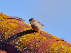 A fledgeling Sparrow on the roof of my house.