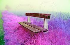foggy day and a bench. Photo by Thomas Males on Mostphotos. Country Bench, Digital Photography, Outdoor Decor, Rustic Bench, Farmhouse Bench