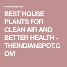 BEST HOUSE PLANTS FOR CLEAN AIR AND BETTER HEALTH - THEINDIANSPOT.COM