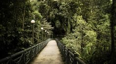 Path to Pouring Hot Springs #malaysia #Kotakinabalu #sabah  Get this print or download at: https://linksproductionsllc.smugmug.com/Kota-Kinabalu-Malaysia/  www.linksproductionsllc.com
