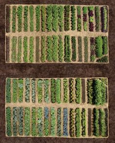Rotate - To change the location each year (usually in a 3- to 4-year cycle) in which a particular vegetable crop is grown, to reduce the threat from soil-borne diseases.