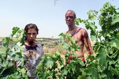 Una horda de Zombies invadirá Medina del Campo y la Ruta del Vino de Rueda a finales de septiembre http://revcyl.com/www/index.php/cultura-y-turismo/item/7901-una-horda-de-zom