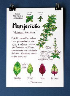 Eco Garden, Love Garden, Little Gardens, Plants Are Friends, My Secret Garden, Growing Herbs, Green Life, Exotic Flowers, Botany
