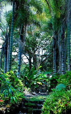 Hawaiian tropical gardens containing exotic plants,