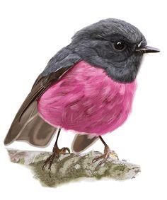 Cute Little Birds - Part One on Behance