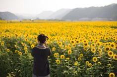 Field of sunflowers.  Please please please let me go there.