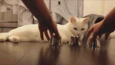 Diese Katze durchschaut jeden Trick