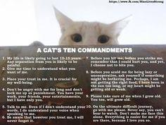 A Cat's Ten Commandments