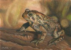 It's sad that my kids may never see a frog or toad :( I've only seen 2 in the last few years where I live
