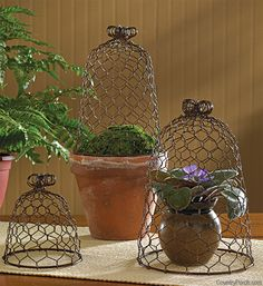 Chicken Wire Cloches Set of Three by Park Designs Country Style Wire Mesh Chicken Wire Art, Chicken Wire Crafts, 99 Chicken, Cloche Decor, Deco Floral, Wire Baskets, Country Decor, Country Style, Diy And Crafts