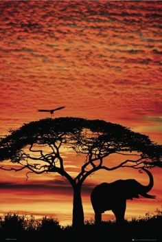 AFRICA SUNSET - elephant poster