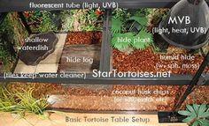 Indoor enclosures for Indian / Sri Lankan and Burmese Star tortoises (Geochelone elegans & G. platynota) and other small dryish area species. Tortoise Terrarium, Tortoise Cage, Tortoise House, Tortoise Habitat, Baby Tortoise, Sulcata Tortoise, Tortoise Turtle, Turtle Terrarium, Pets