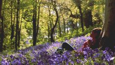 cinemagraph gif cinemagraph bloom bluebells