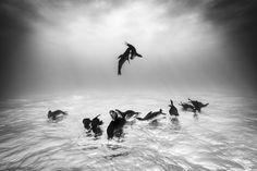 Wildlife Photographer of the Year: Diese Tierbilder sind atemberaubend