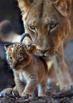 Momenti di Vita: Regno ANIMALE