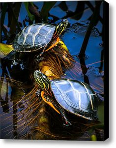 """See our website for more details on """"buy art online"""". It is actually an exceptional area to learn more. Terrapin, Turtle Pond, Turtle Time, Pet Turtle, Internet Art, Turtle Painting, Wildlife Nature, Art Nature, Buy Art Online"""