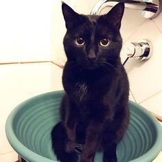 Minou! 🐈🛁#mygreatcat #my_loving_pet #cat #gatto #catoftheday #catsofinstagram #catstagram #gatti #instacat #instacat_meows #bestmeow #topcatphoto #miao #catlover #gatto #catoftheday #katze #gato #chat #猫  #neko #猫好き #Exellent_Cats #子猫 #プッシーキャット #ニャー #甘い #愛猫
