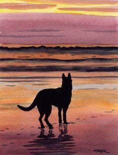 Hoping Bear meets me in heaven on a beach like this. Would be a happy reunion!
