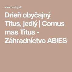 Drieň obyčajný Titus, jedlý | Cornus mas Titus - Záhradníctvo ABIES