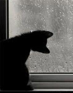 Betman cat | Funny & Cute Cat Pictures