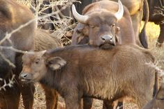 #KwaZulu-Natal Thanda Game Reserve #South Africa