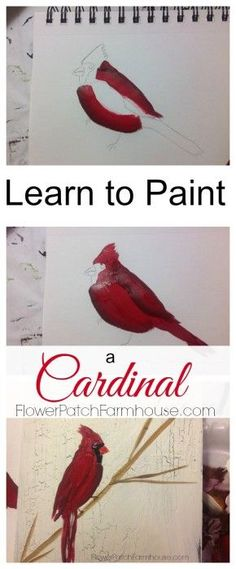 a Cardinal in Acrylics - Pamela Groppe Art How to Paint a Cardinal tutorial. Easy enough for beginner, video included. How to Paint a Cardinal tutorial. Easy enough for beginner, video included. Painting Lessons, Painting Techniques, Art Lessons, Painting & Drawing, Painting Tips, Painting Canvas, Matte Painting, Watercolor Techniques, Acrylic Painting Tutorials