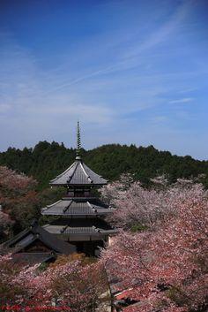 青空と白い雲と吉野山 : ぼちぼち行こか~!奈良大和路. Yoshino, Nara-Ken, Japan