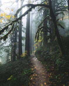 time for an adventure - theme | into the wild - nature - natural - wilderness -forest - mountains - path - paths - trail - trails - fog - beautiful - explore - wanderlust - hiking - camping - backpacking - trip - travel - vacation - discover places - bucket list - idea - ideas - inspiration - landscape photography