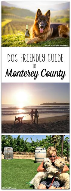 This Dog Friendly Guide to Monterey County in California is just what you need to plan your next adventure with your furry friends! You'll find info on hotels, restaurants, shopping, hiking, beaches, and more in this helpful guide! TablerPartyofTwo.com