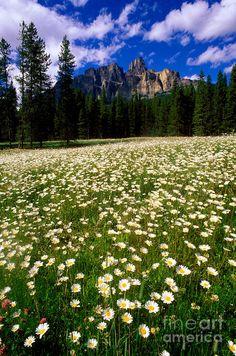 ✮ Castle Mountain - Banff National Park - Canada. via Diane Aldrich